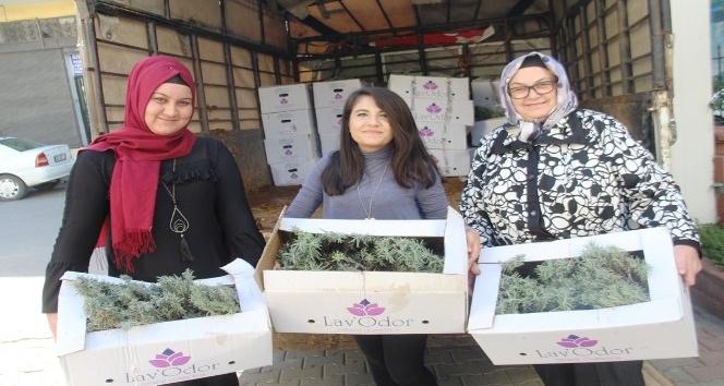 Kadın çiftçilere 12 bin adet lavanta fidesi dağıtıldı