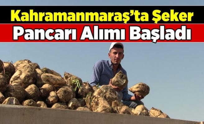 Kahramanmaraş'ta şeker pancarı alımı başladı