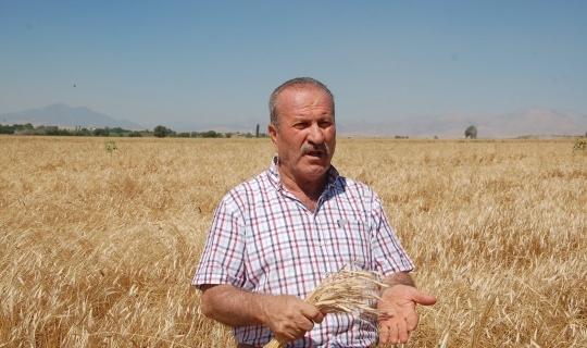 Siyez Buğdayı Afşin'de İşlenecek